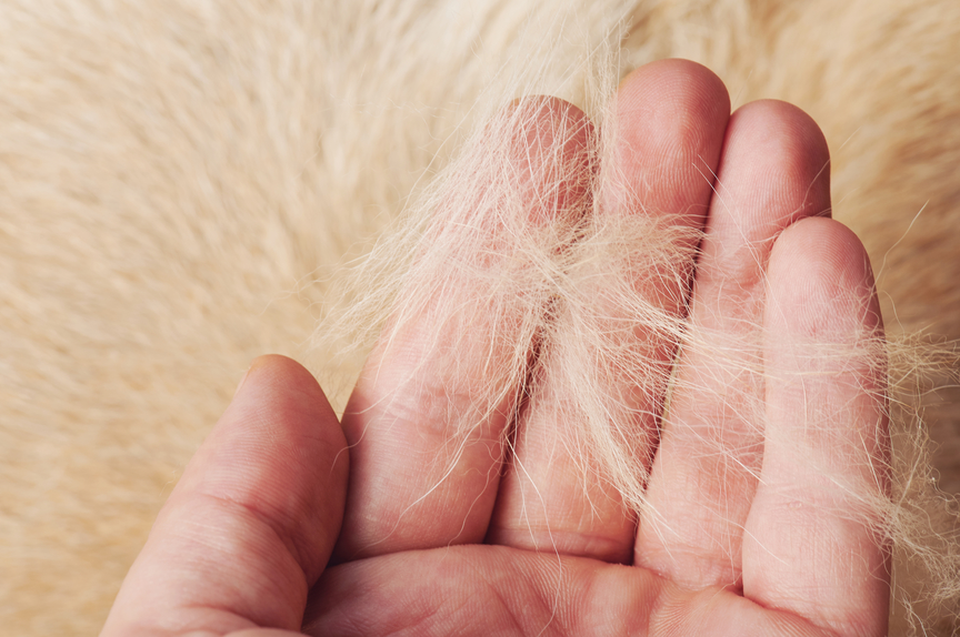 Solve Your Pet's Shedding Problem with Probiotics
