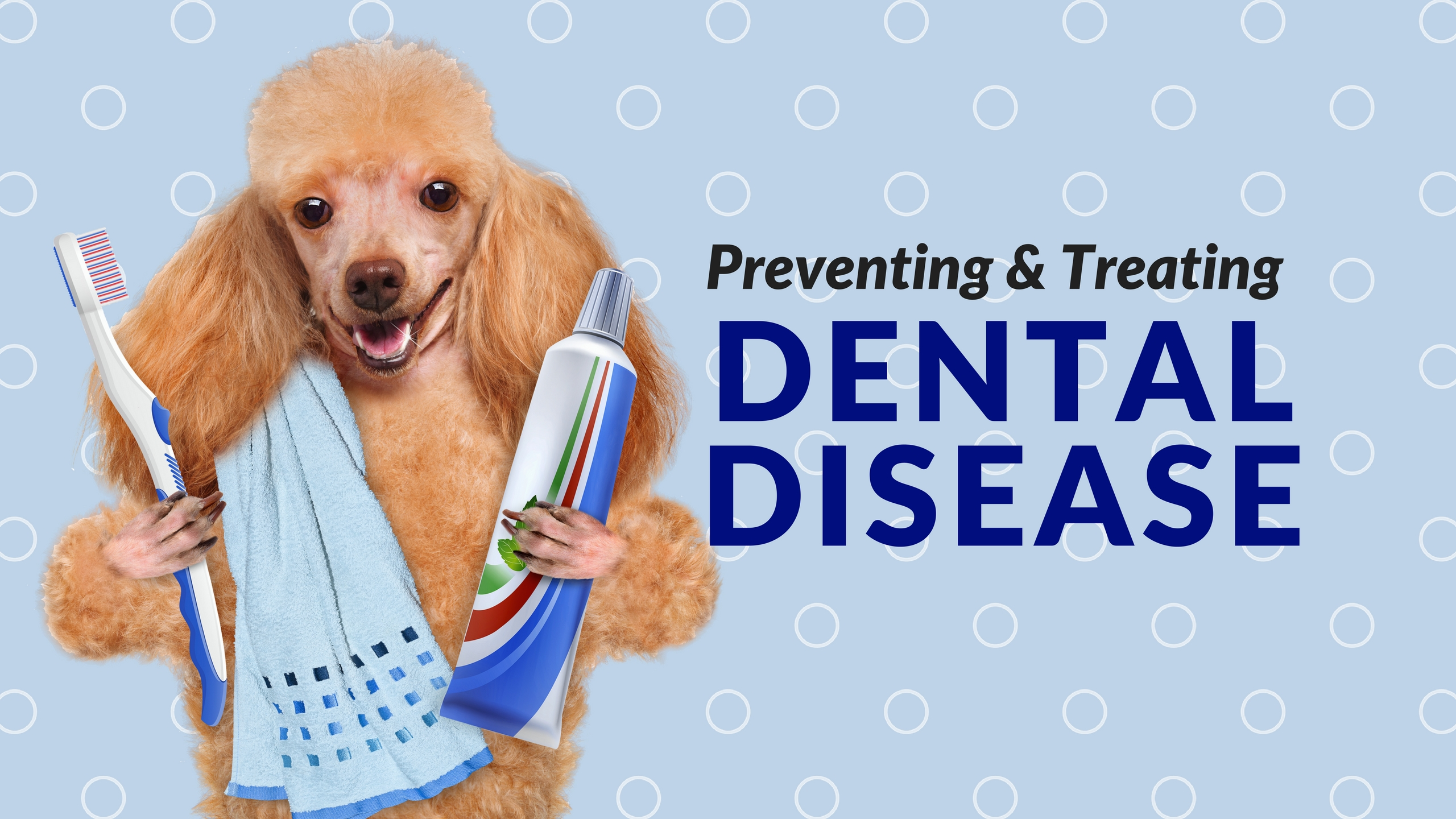 7 Tips for Preventing and Treating Dental Disease in Dogs