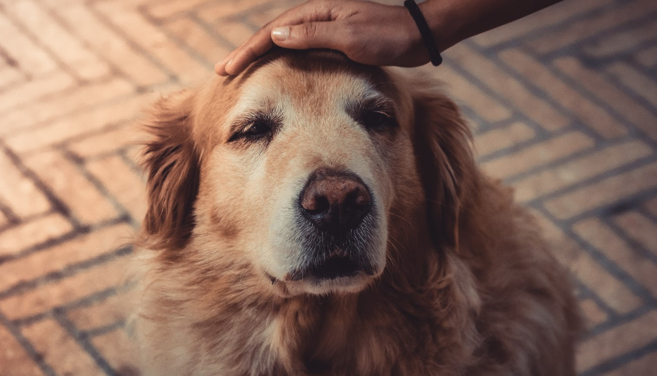 Caring for Your Senior Pet at the Barkery