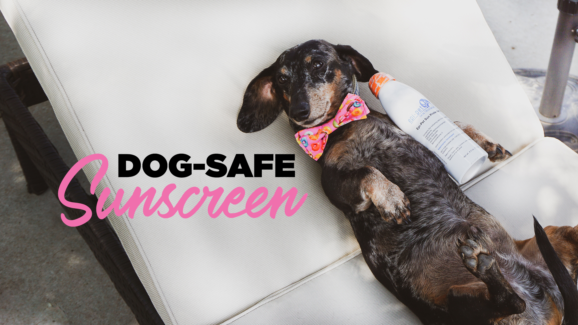 Is Sunscreen Safe to Use On Pets?