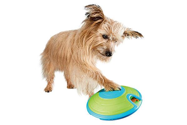 Interactive dog feeder