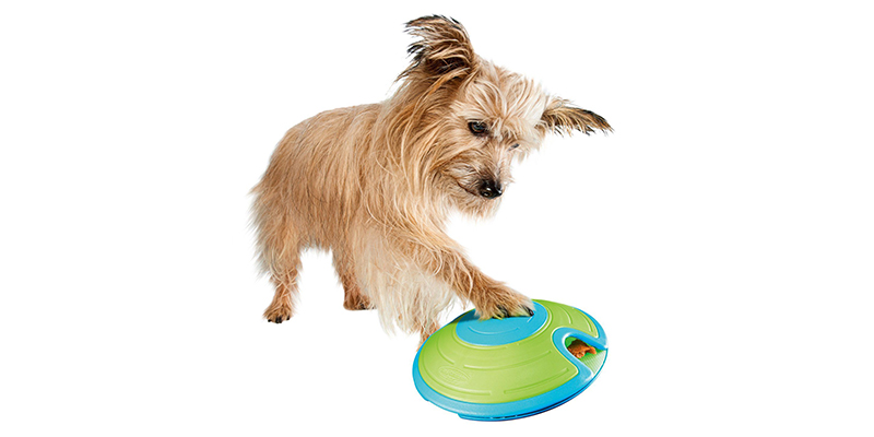 New! Interactive and Slow Feeders at The Barkery!