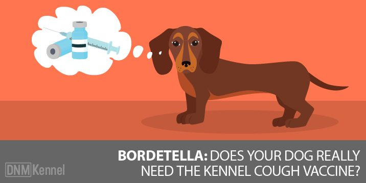 Does Your Dog Need the Kennel Cough Vaccine?