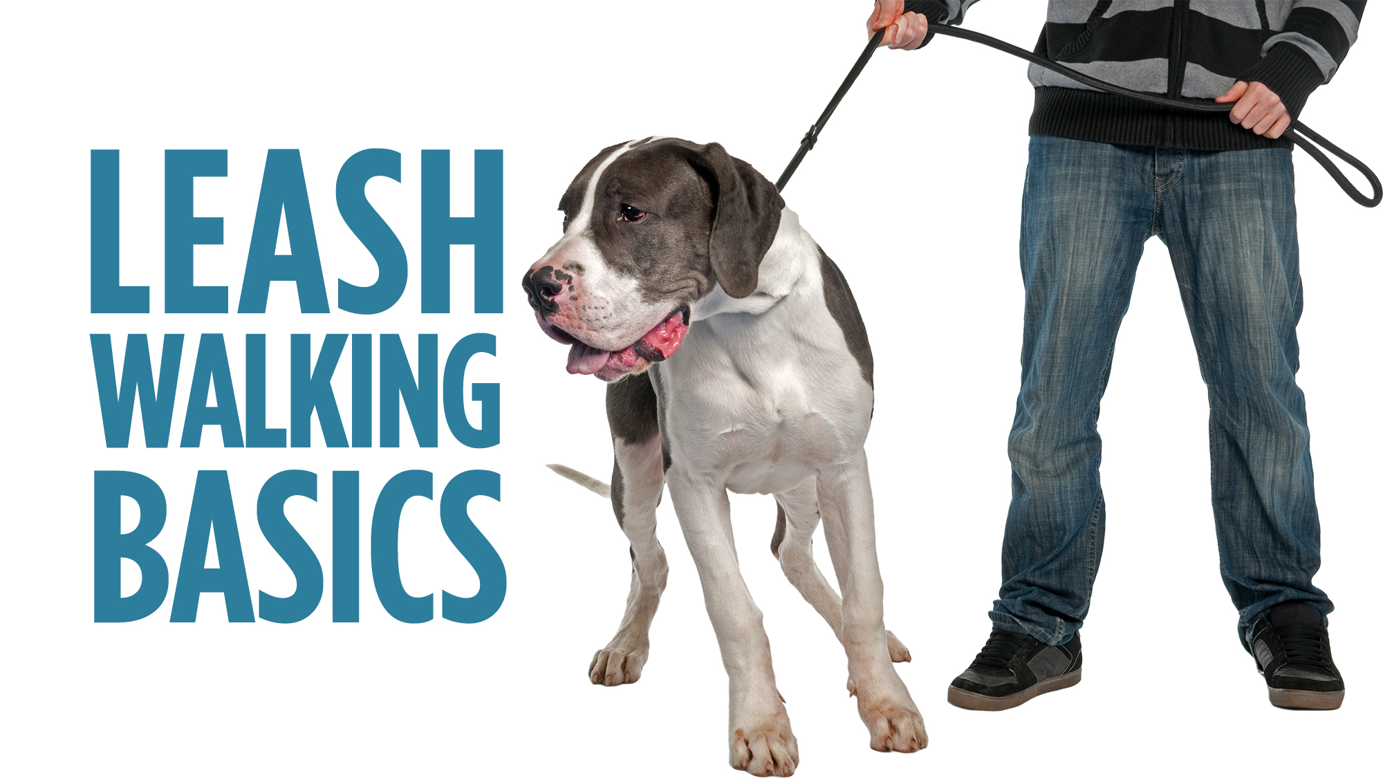 Leash Walking Basics