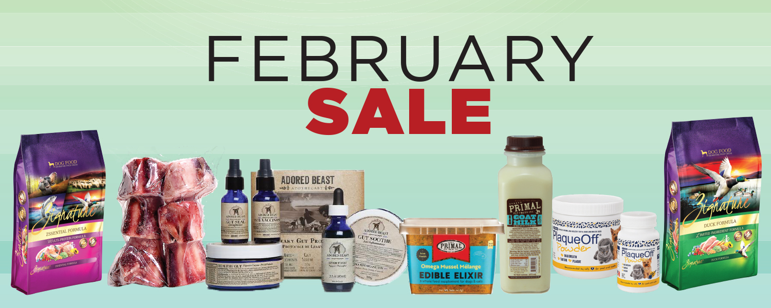 February is Pet Dental Health Month – 25% Off Dental Supplements & More!