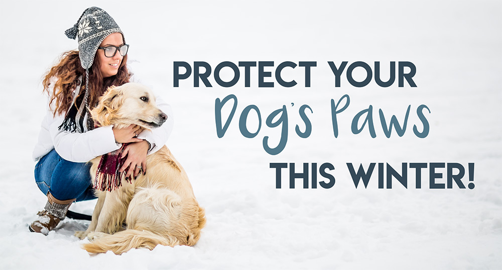 Protect Your Dog's Paws This Winter