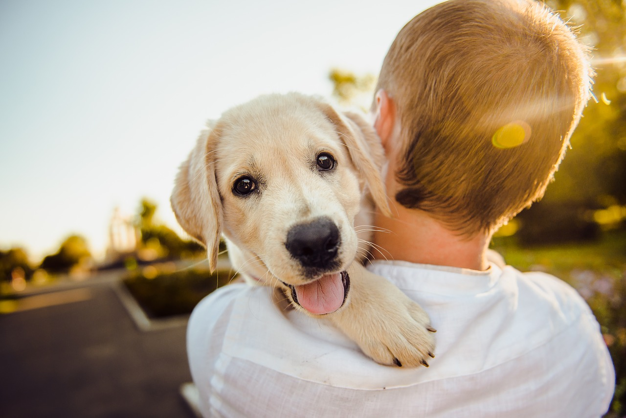 5 Tips on Your Puppy's First Year