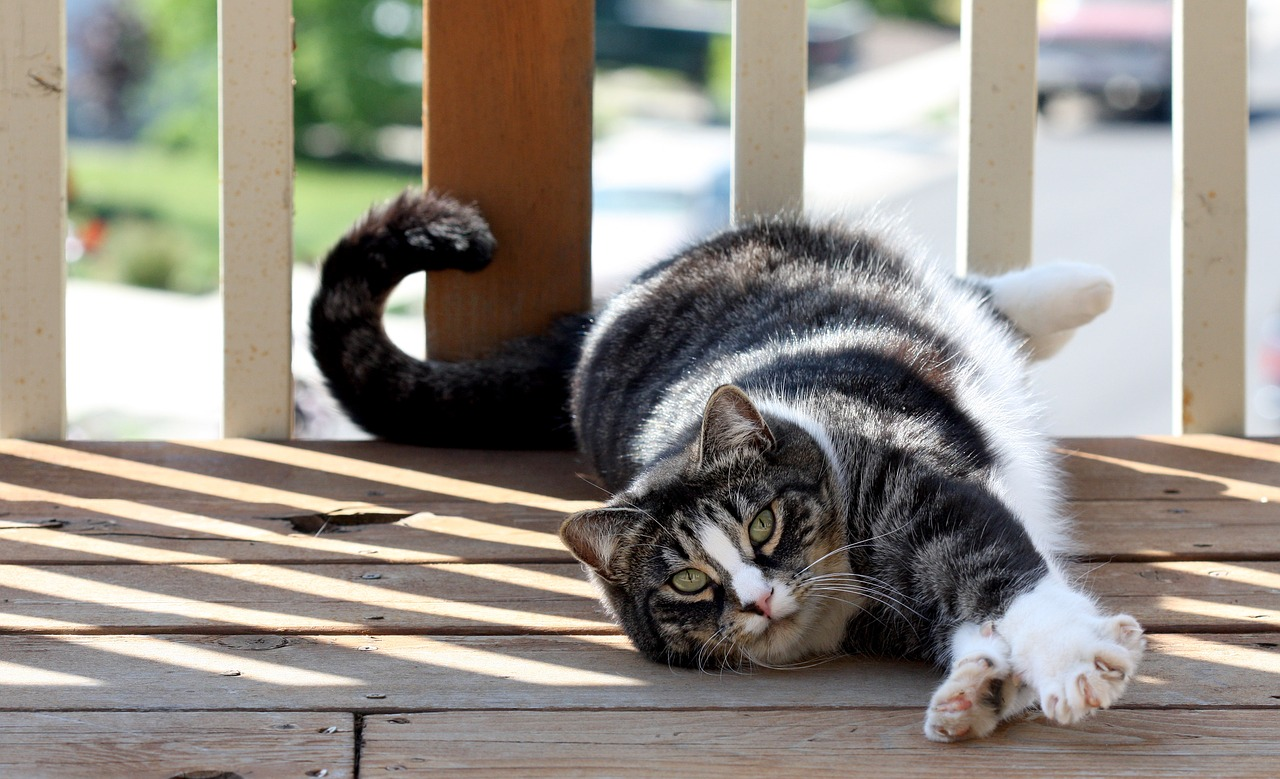 Just Say No – To Declawing Cats