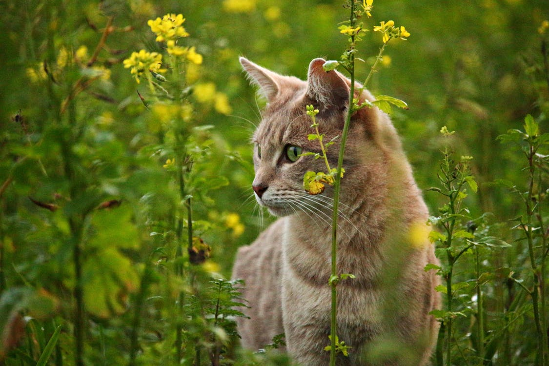 How to Prevent UTIs and Bladder Infections in Your Cat