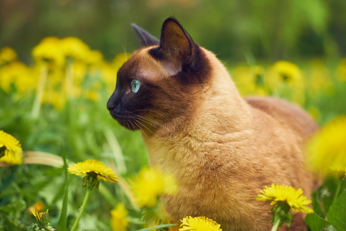 Poisonous Plants for Cats – What to Avoid