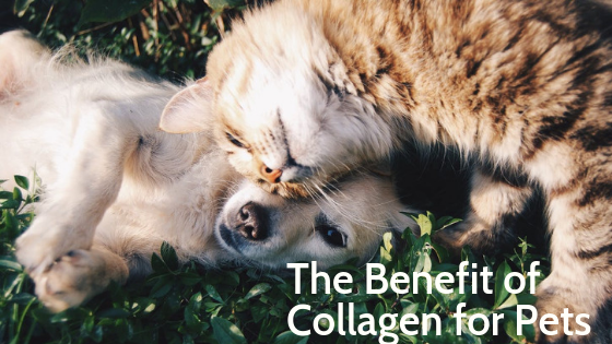 5 Reasons to Add Collagen to Your Pet's Diet