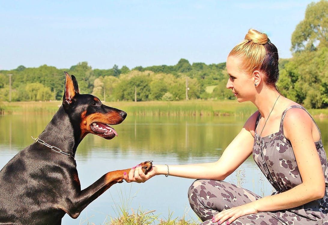 Dog Owners: Beware of Toxic Blue-Green Algae