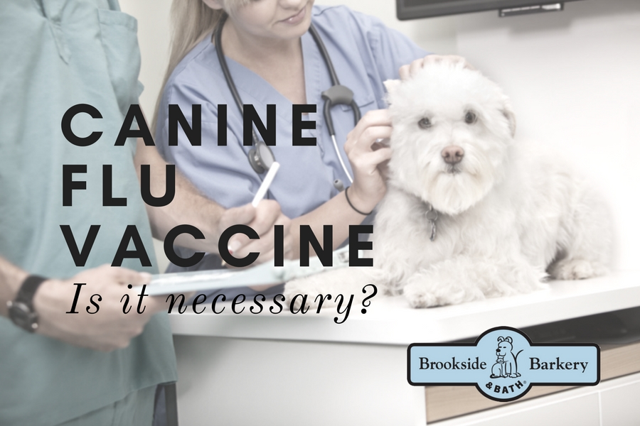 Canine Flu Vaccine: Is It Necessary?