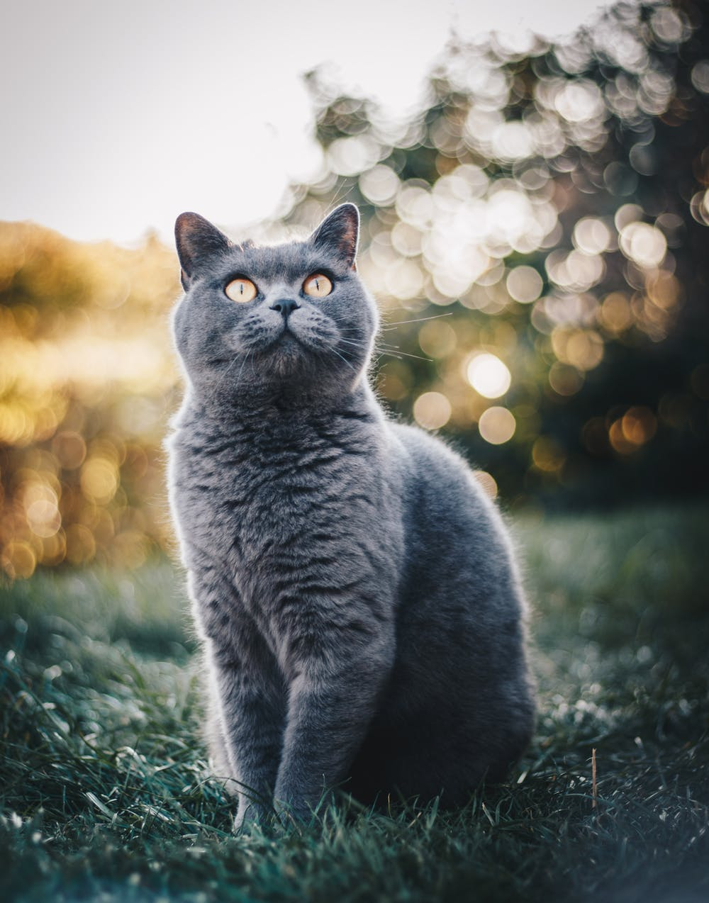 Hairballs – A Healthy or Hairy Situation?