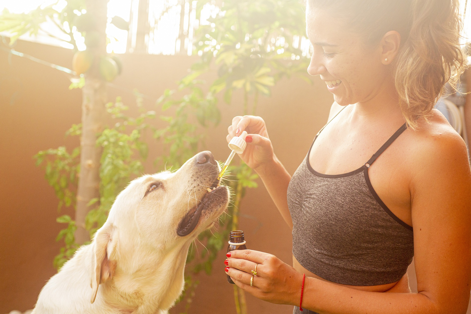 Celebrate National CBD Day with 10% off at the Barkery!