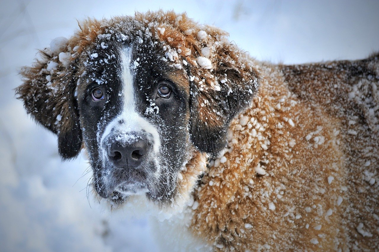 Winter-Proof Your Pet Now!