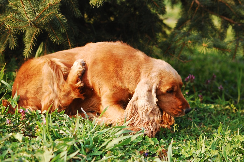 Treat Your Pet for Fleas and Ticks Safely with the Barkery
