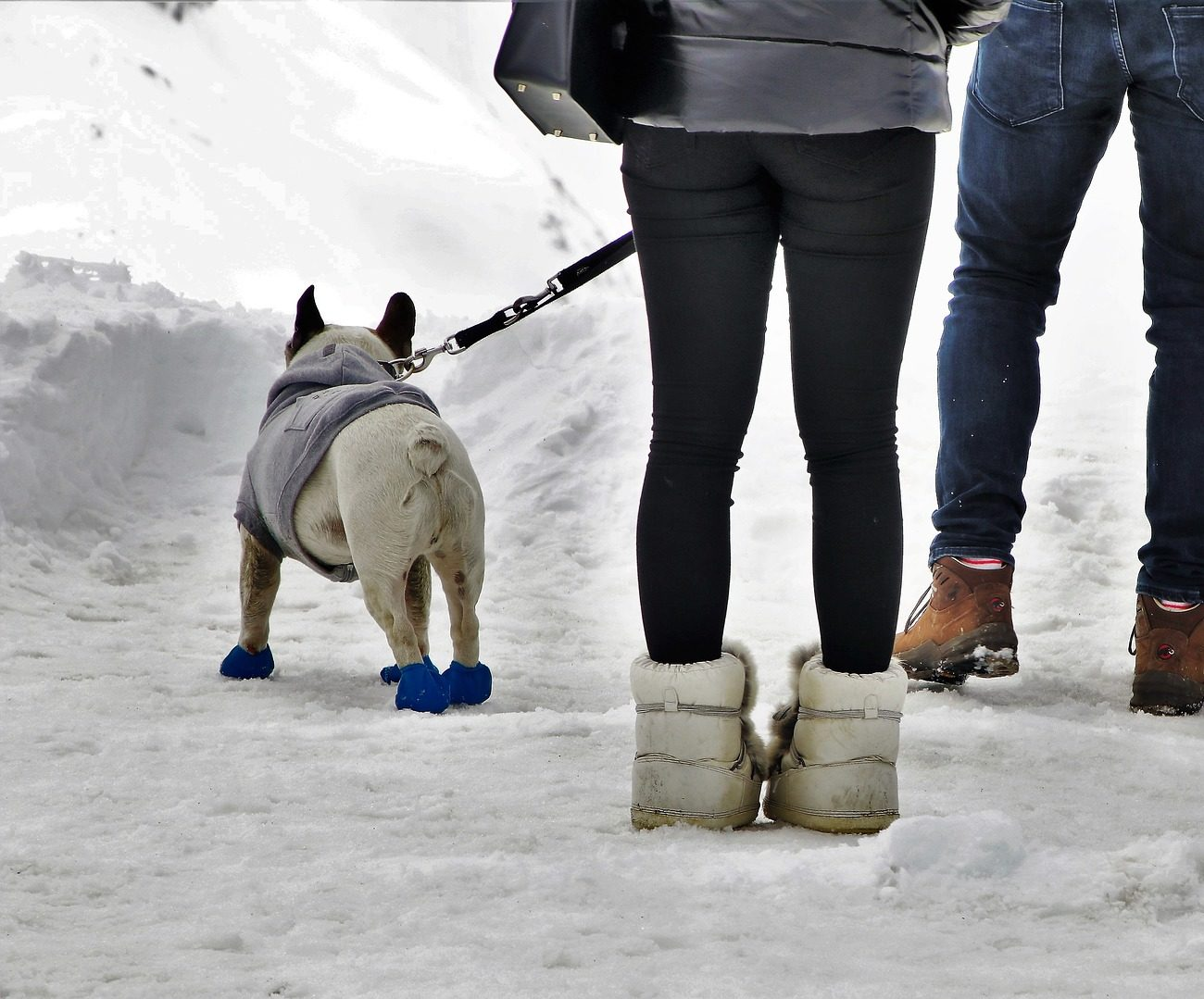 The Importance of Pet Safety: Winter Rock Salt and the Damage it Can Cause