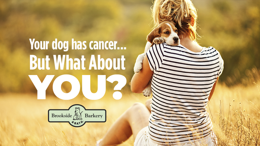 Your Dog Has Cancer! But What About You?