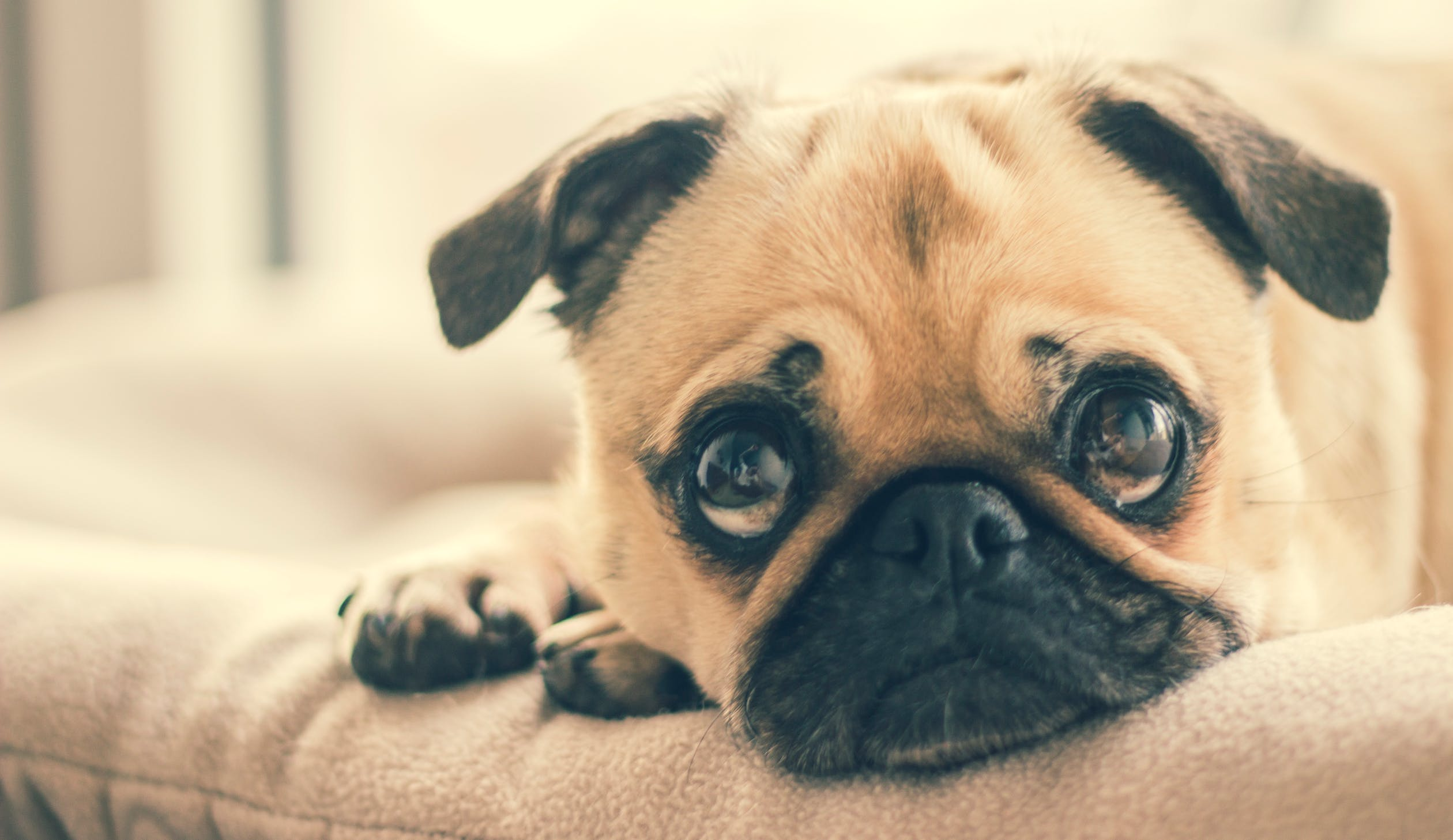 Reset Your Dog's Gut Health in 5 Steps