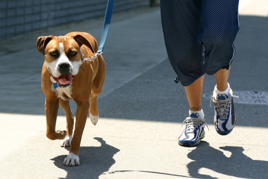 Tips to Protect Your Dog's Paws From Hot Pavement