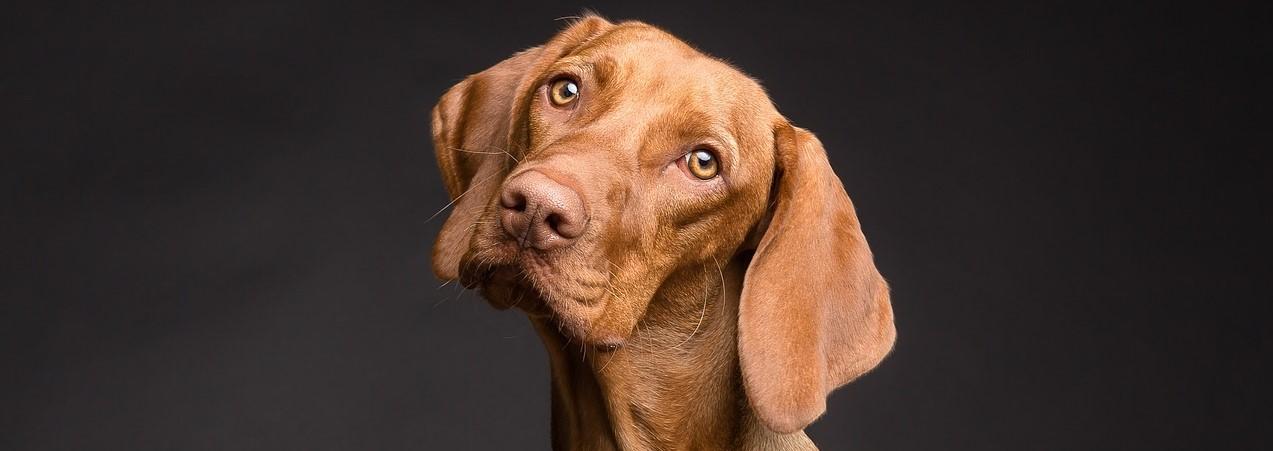 Your Dog's Prescription Pet Food: Harmful or Helpful?