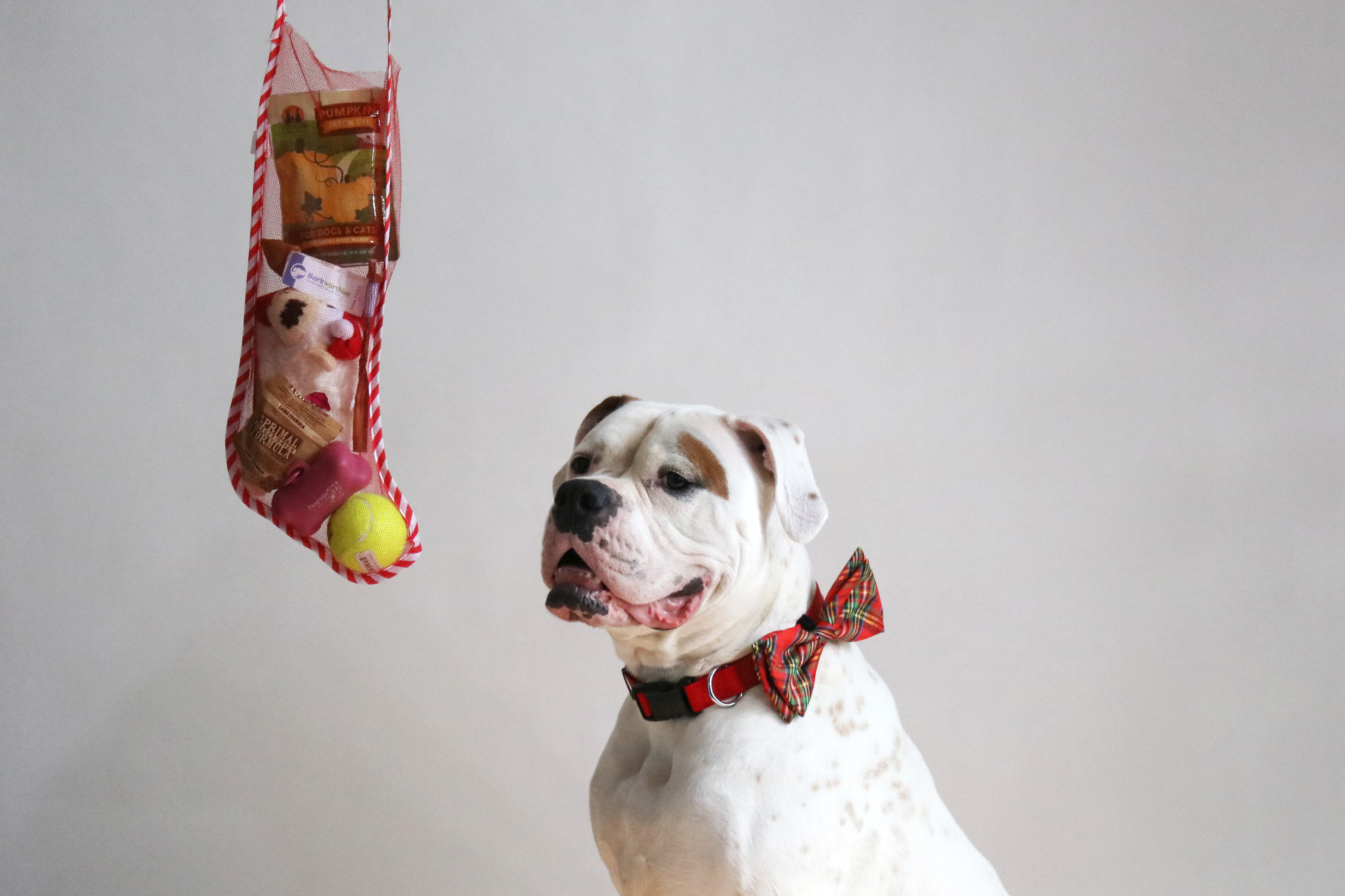Don't FURget your Pet's Holiday Gift!