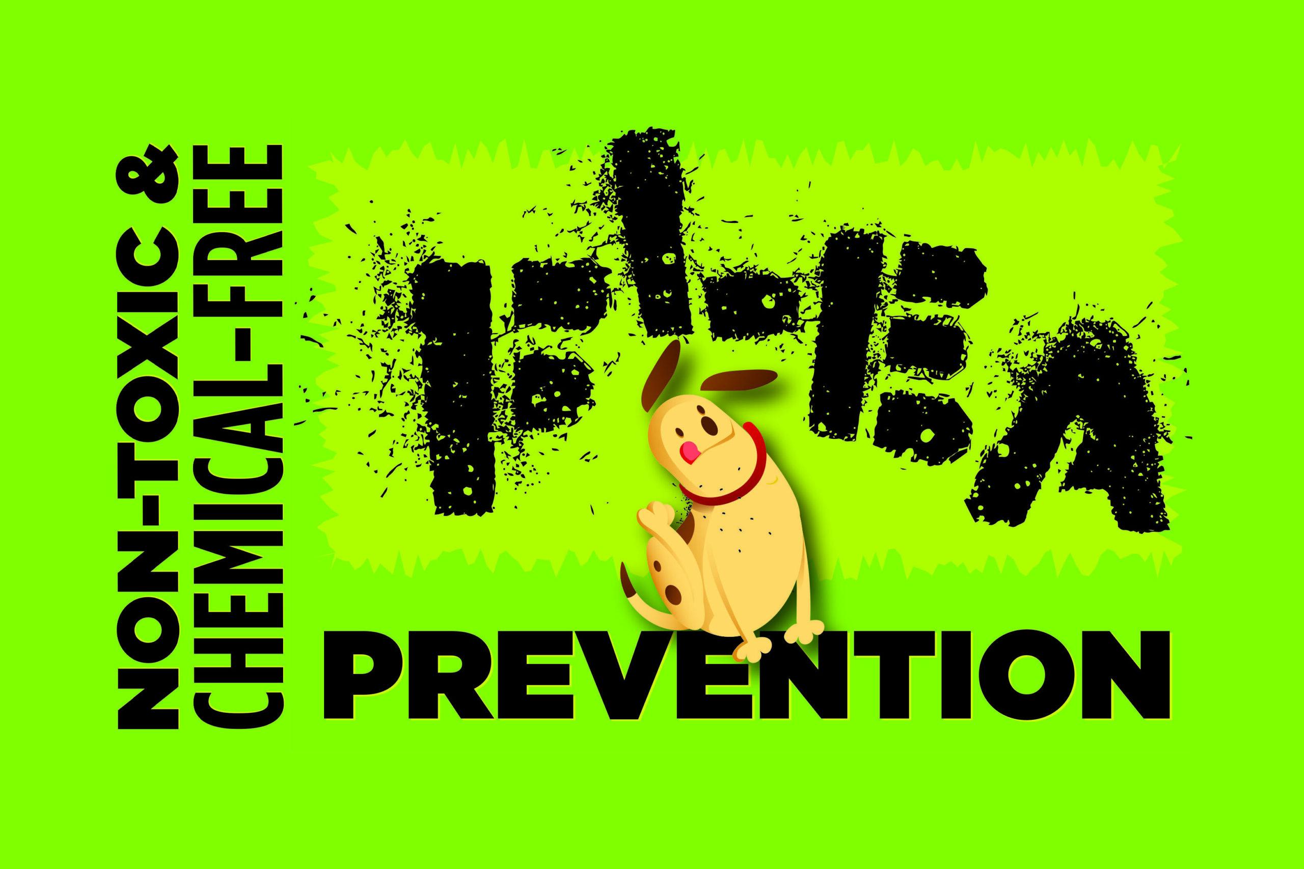 Nontoxic Flea Prevention