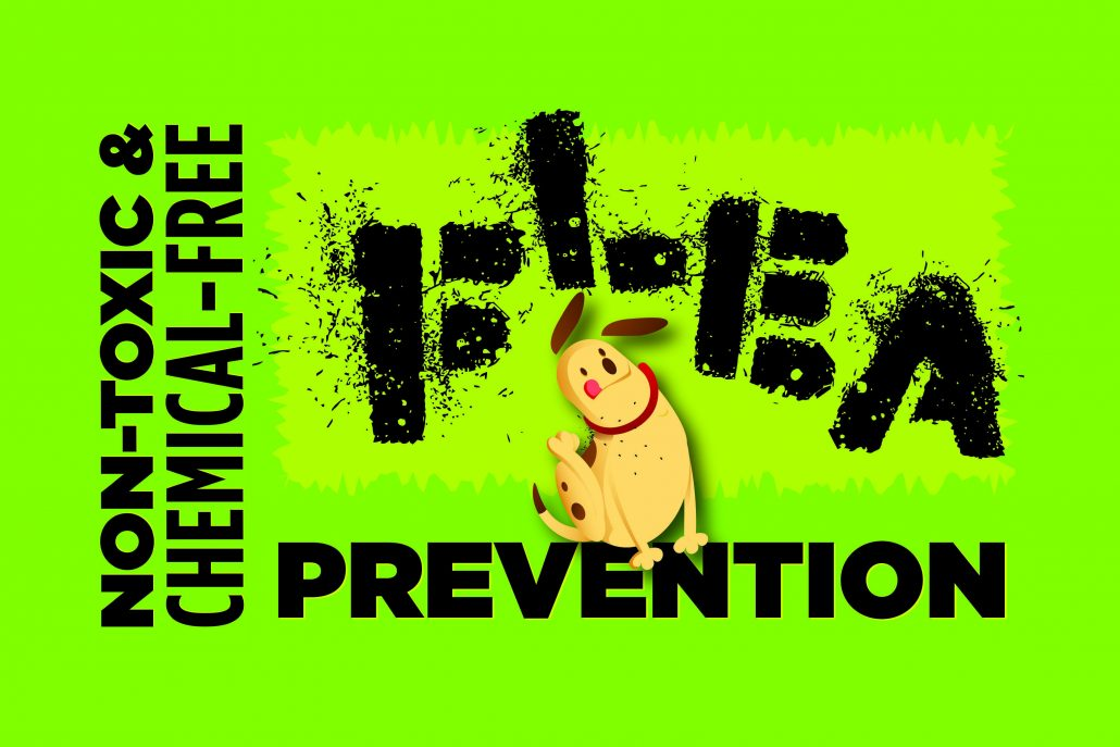 Nontoxic Flea Prevention