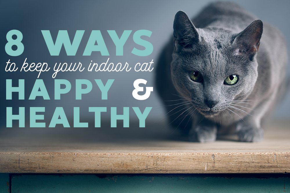 8 Ways to Keep Indoor Cats Happy & Healthy