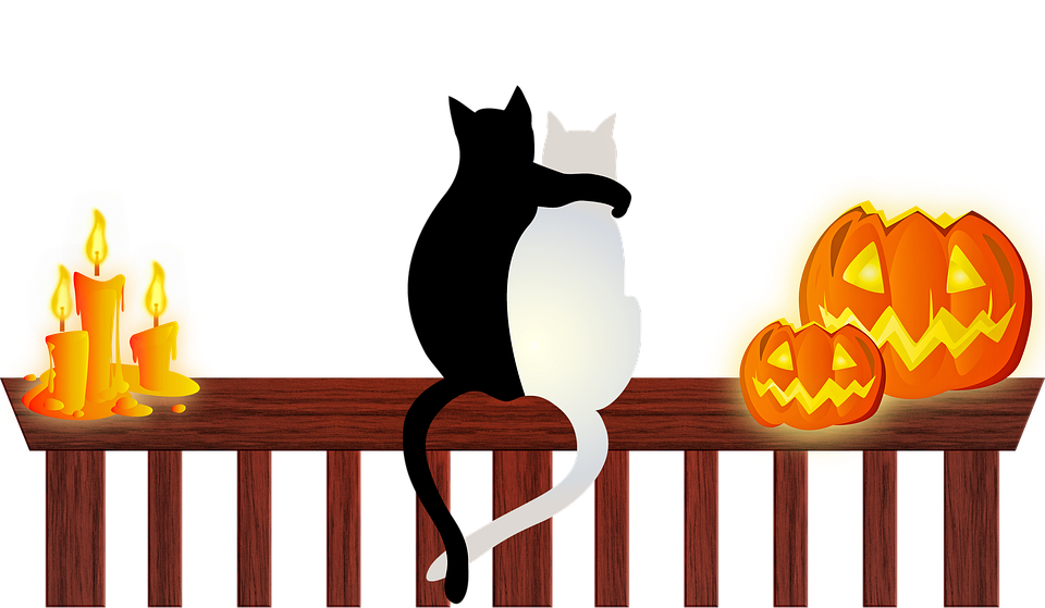 Keep Your Cat (and Other Pets) Safe This Halloween!