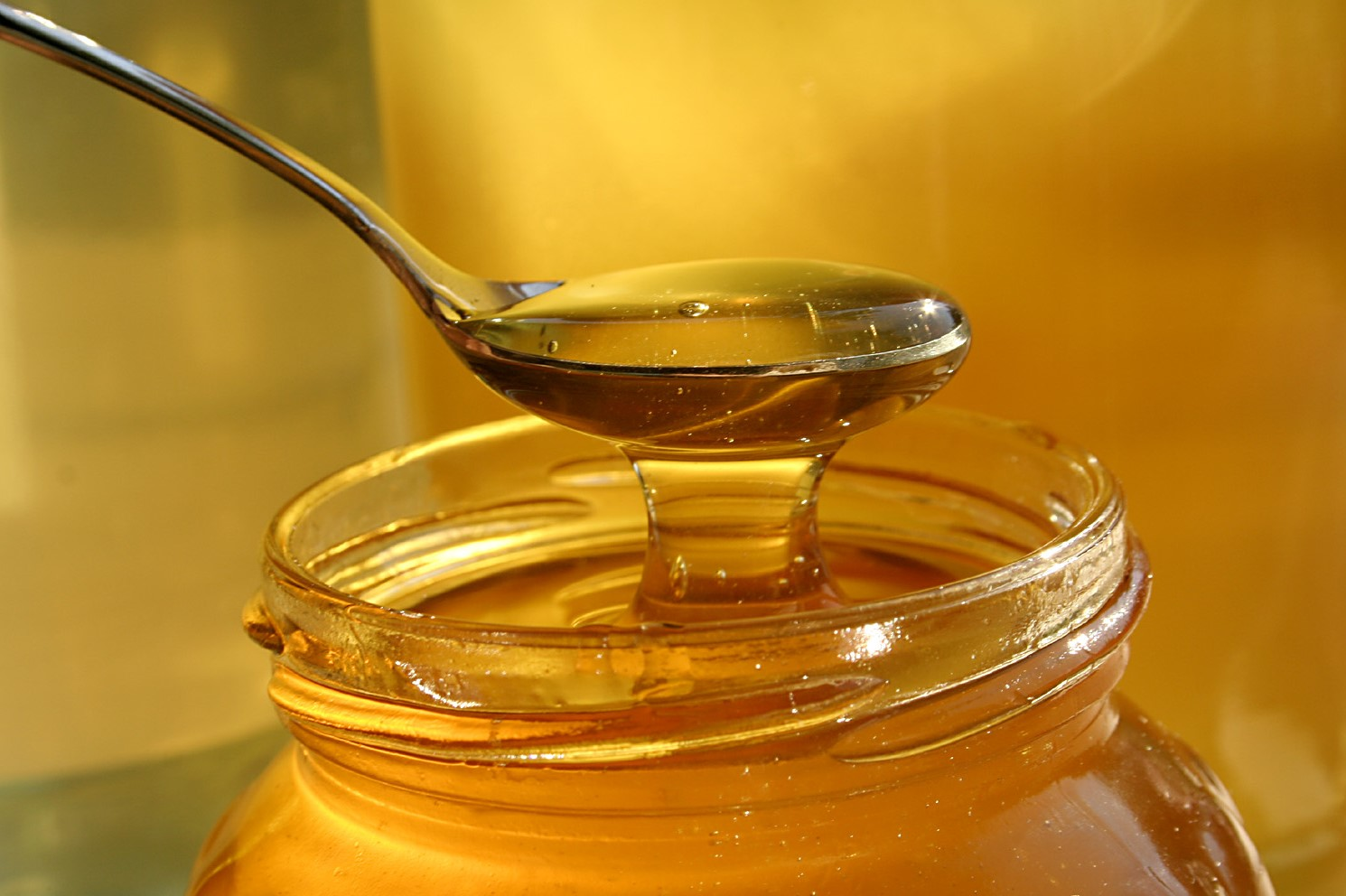 5 Reasons to Feed Your Dog Raw Honey