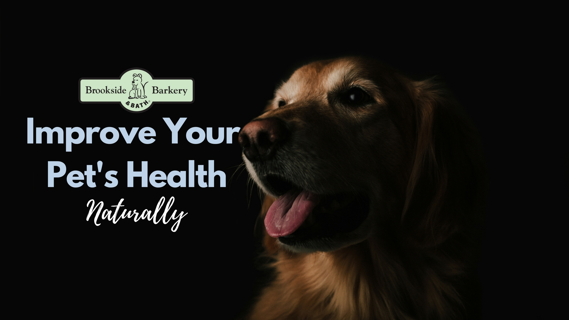 6 Ways to Improve Your Pet's Health Naturally