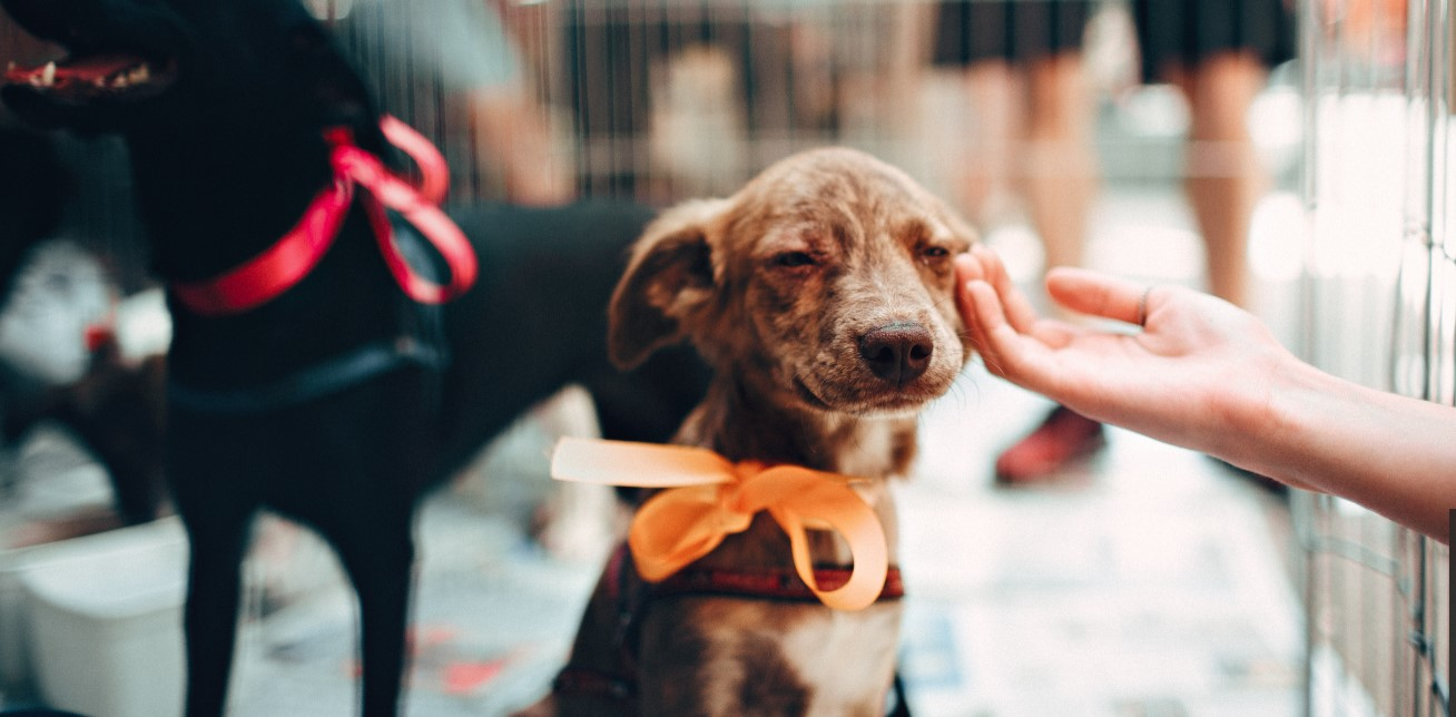 Support Chain of Hope During Love Your Pet Week!