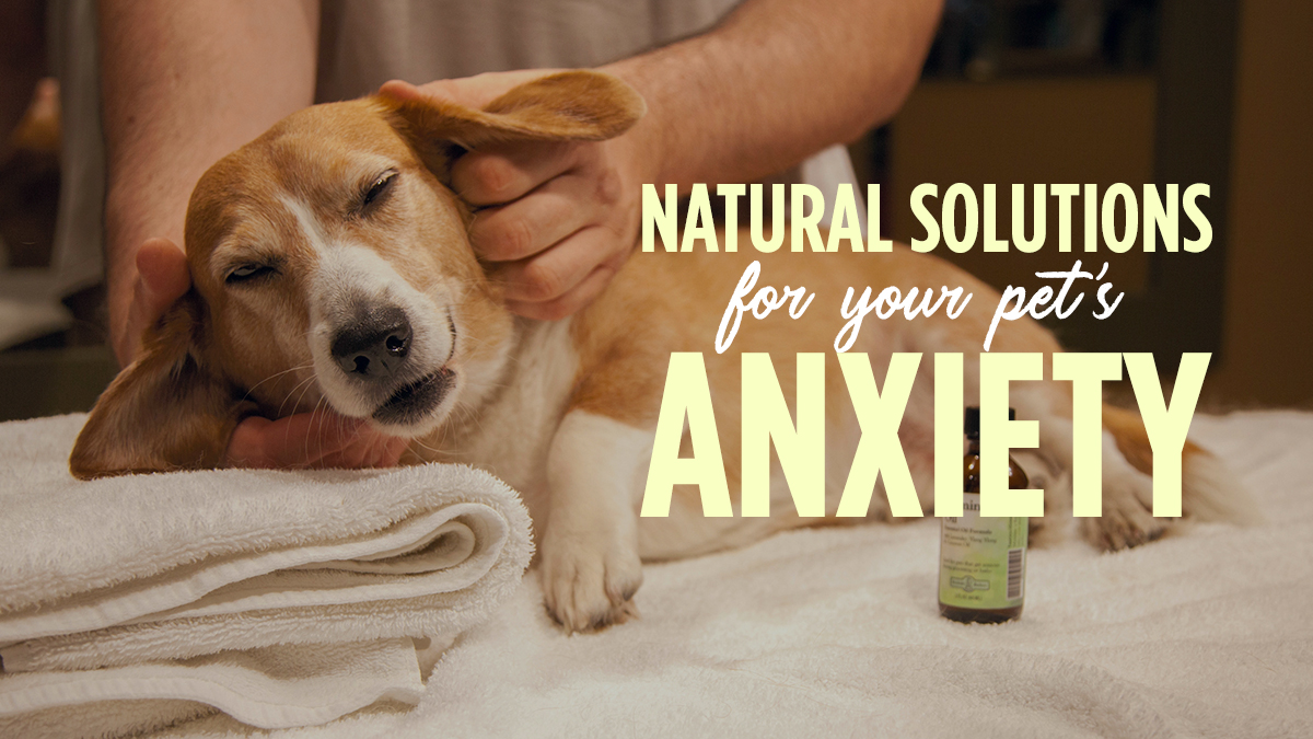 Natural Solutions for Your Pet's Anxiety