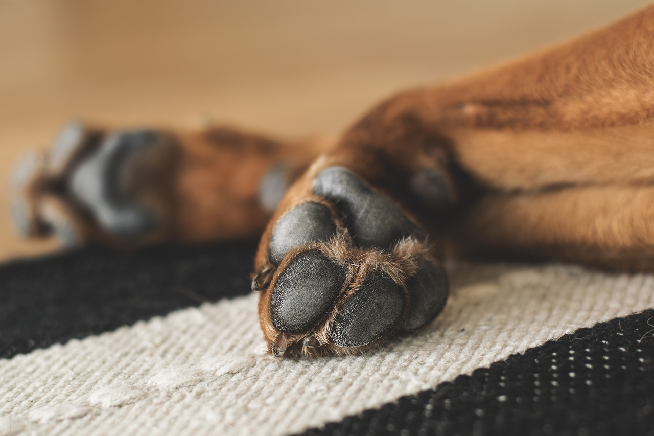 Keeping Your Dog's Paws Clean and Healthy