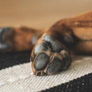 dog paws rug