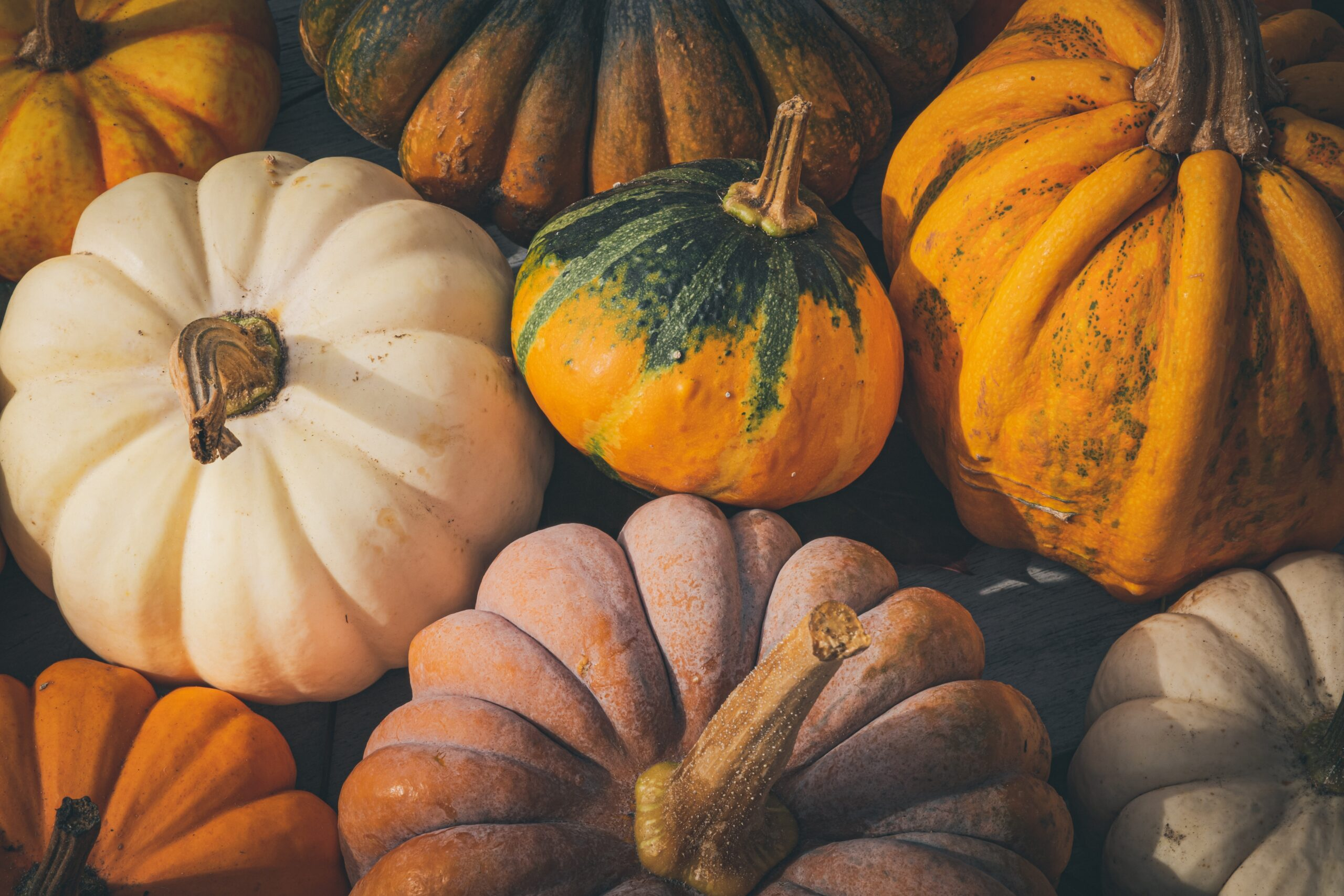 How Pumpkin Can Treat Your Dog's Bowel Issues