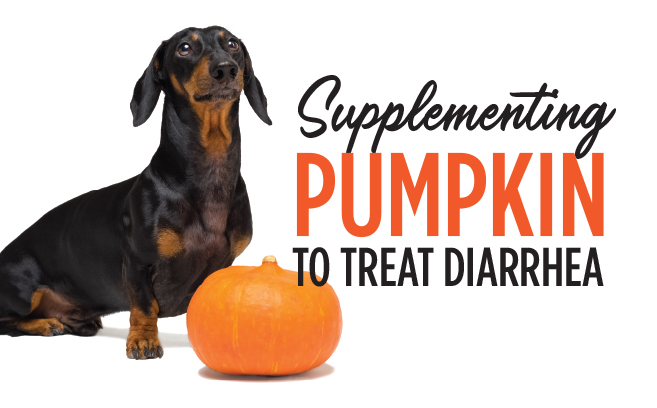Pumpkin for Treating Diarrhea in Dogs