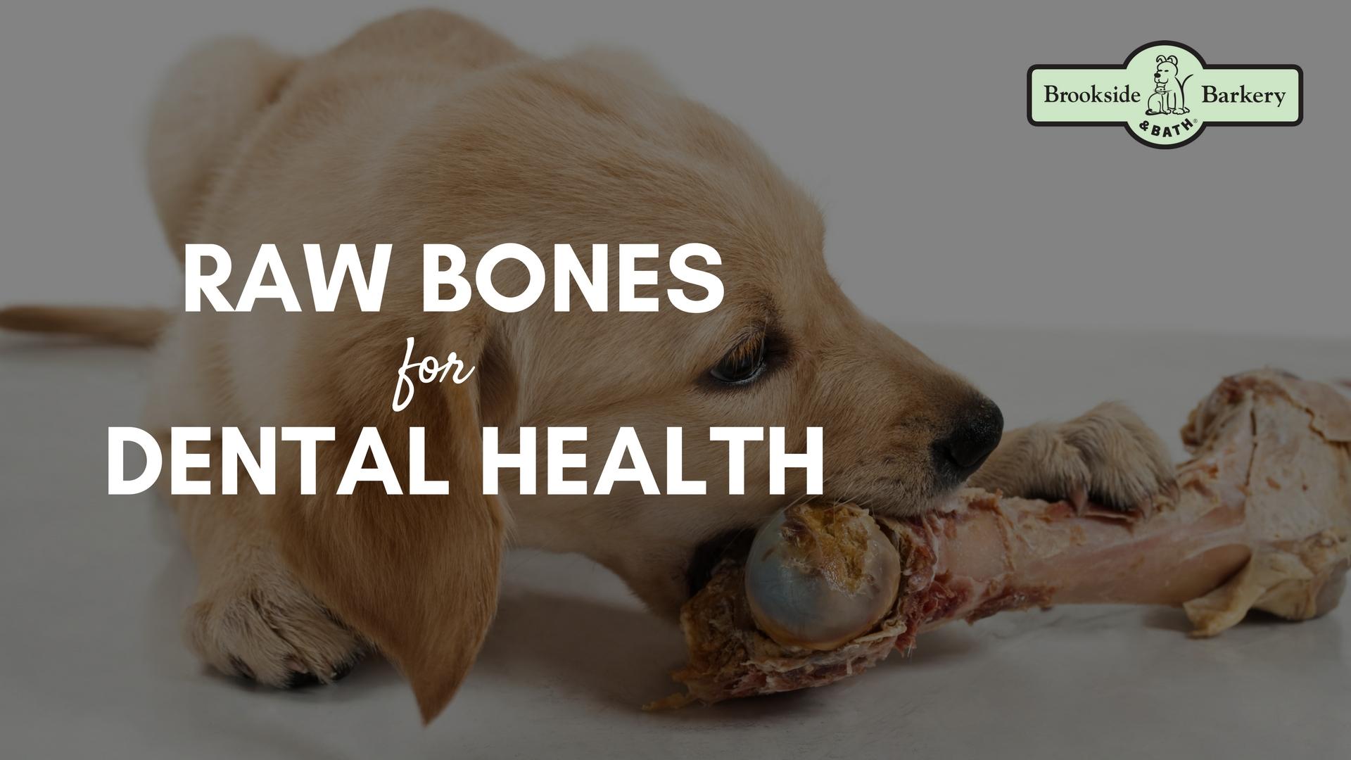 Raw Bones for Dental Health