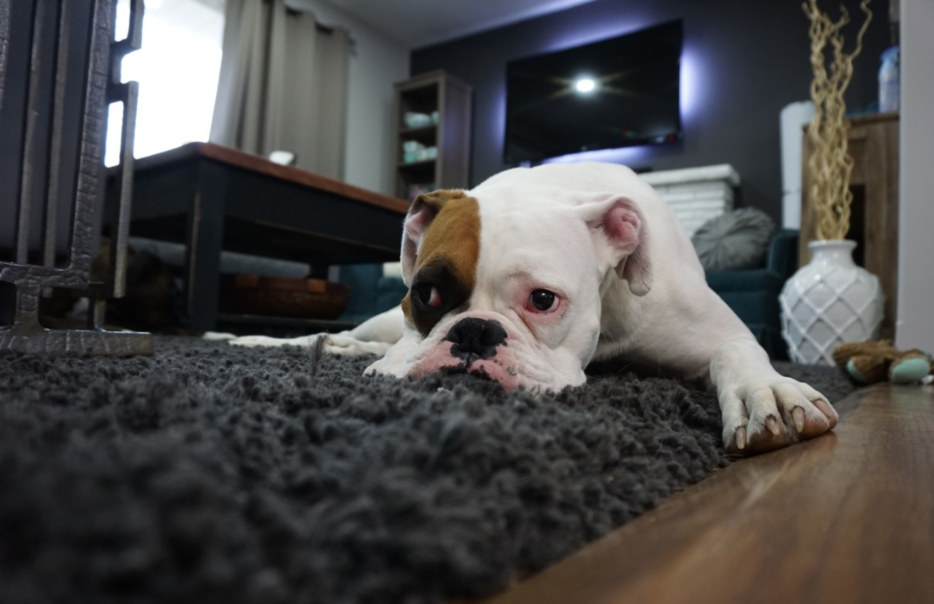 Coping with Pet Anxiety During Storms