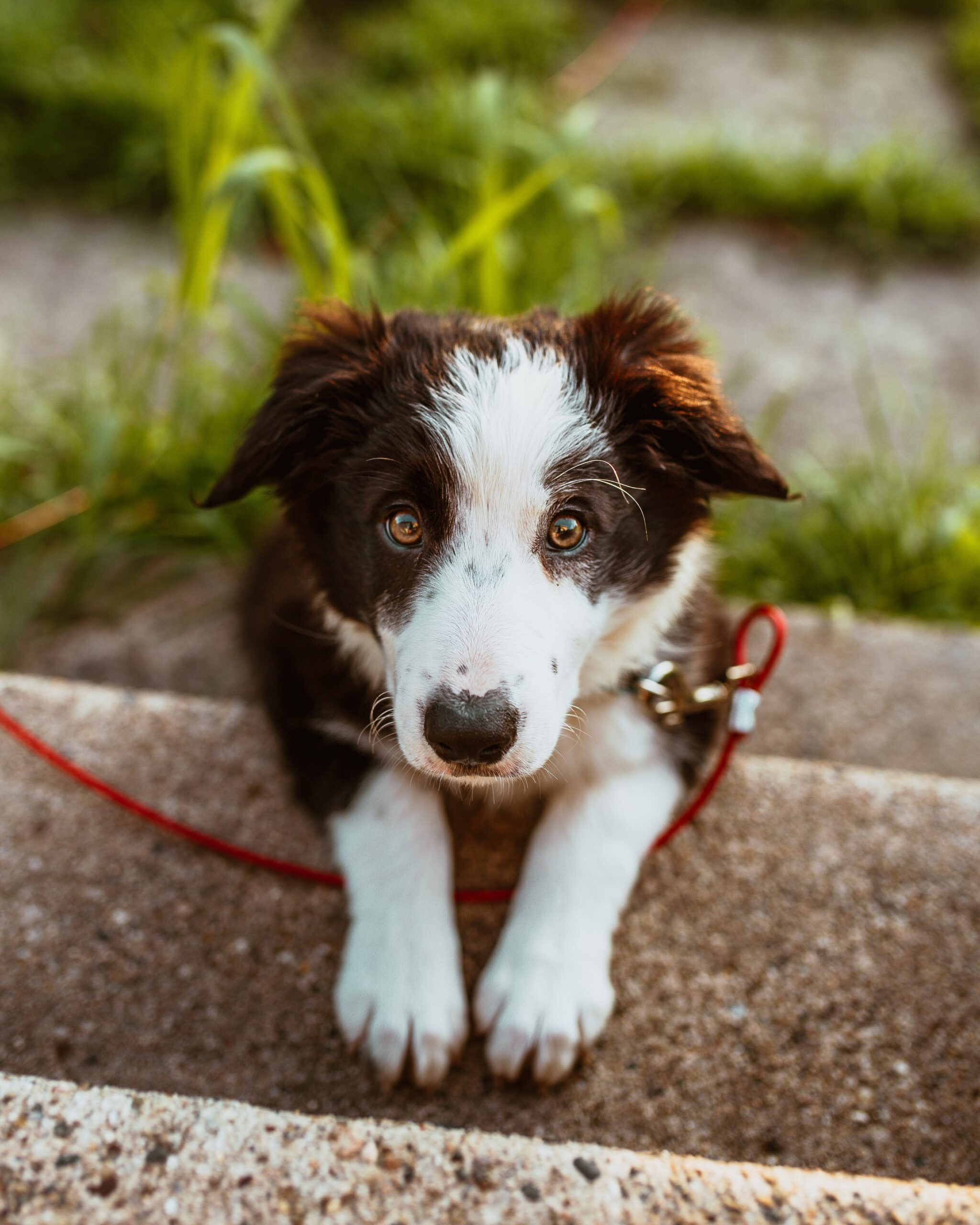 How to Socialize Your Puppy During Social Distancing
