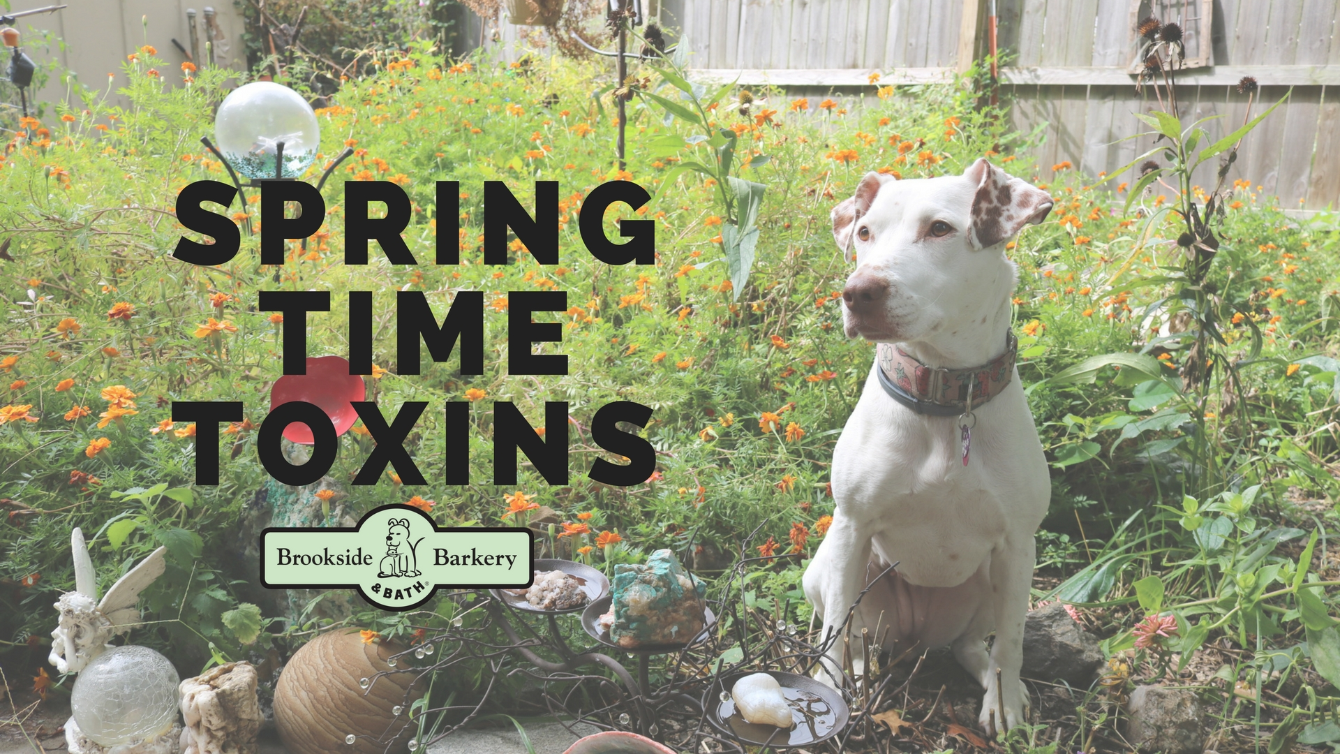 Spring Time Toxins