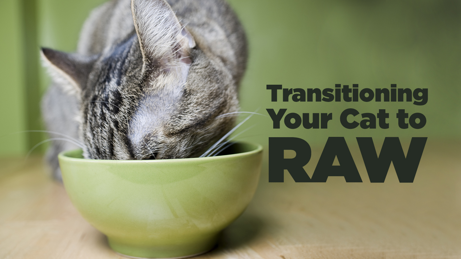 Transitioning Your Cat to Raw