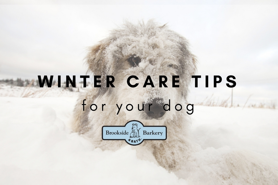 13 Winter Care Tips for Your Dog